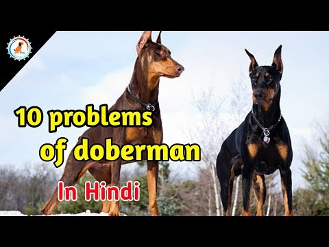 10 Problems OF Doberman pincher / in hindi / problems of dogs