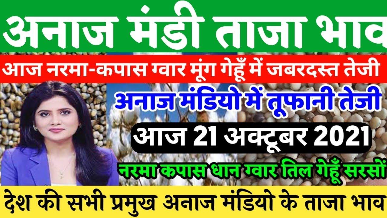 Download आज 21 अक्टूबर अनाज मंडी भाव,| नरमा(Cotton) ग्वार मूंग मेथी गेहूँ में जबरदस्त तेजी,| Anaj Mandi bhav,