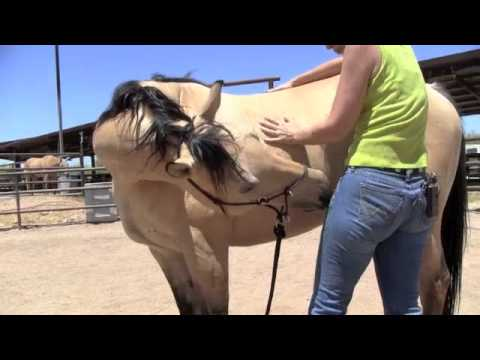 Mutual Grooming with your Horse