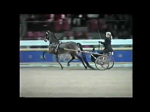 2000 Royal Winter Fair Hackney Pleasure, Road Pony and Mare In Hand