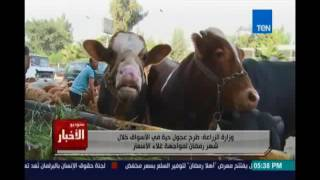 hhستوديوالاخبارh.. وزارة الزراعة : طرح عجول حية في الاسواق خلال شهر رمضان لمواجهة غلاء الاسعار