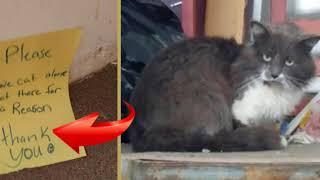 """""""Кота — не спасать! Он сидит тут по важной причине!"""""""
