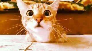 Кот и самый ужасный фильм ужасов  ШОК!