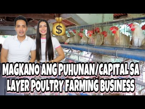 MAGKANO ANG PUHUNAN/BUSINESS CAPITAL NG LAYER POULTRY FARMING SA PILIPINAS | DWIGHT