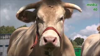 Quelques images du Concours Départemental d'élevage 2017 à Hagetmau