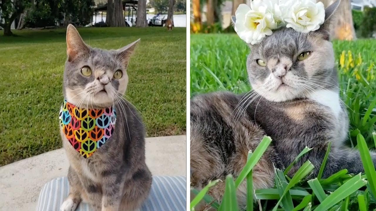 Adorable Cat With Down Syndrome
