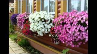 Неприхотливые комнатные растения: виды цветущих, цветы для кухни, какие выбрать, фото примеров, видео, где поставить