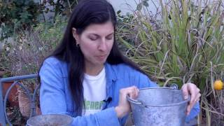 Planting & Growing Potatoes in Pots: Part 2 - Harvest