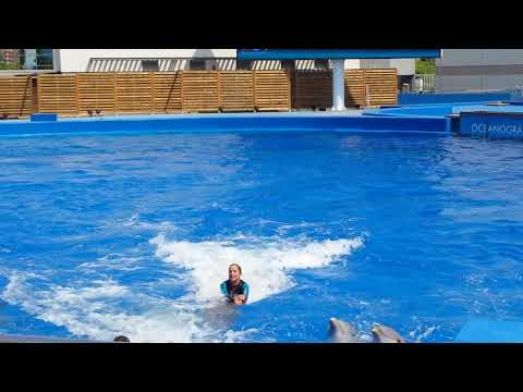 Swimming with dolphins at Oceanografic Valencia