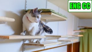 DIY Cat Walk on the Cat Room Wall, Part 6 The Final Showcase to the Cat【Eng CC】