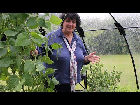 Pippa Greenwood Haxnicks Sunbubble - the flexible, easy to assemble greenhouse alternative