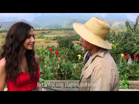 Cuba Tour- Organic Farm in Vinales, Pinar del Rio
