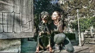 Amazing Dog Rottweiler Max