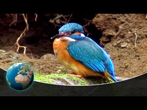 The Kingfisher - Germany's Flying Diamond
