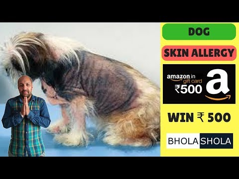 Pet Care – Skin Allergy For Dog ( Canine Atopic Dermatitis ) – Bhola Shola
