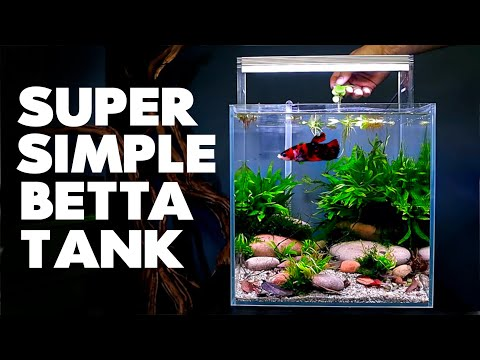 aquascape-tutorial:-betta-cube-aquarium-(how-to-step-by-step-planted-tank-guide)