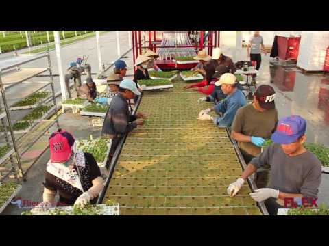 Stone Wool line - Roelands Plant Farms Canada 2016