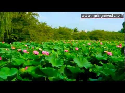 ดอกไม้ประจำชาติเวียดนาม