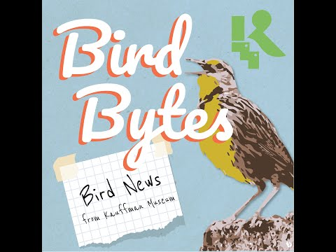 Bird Bytes // Episode 3: Bird Songs