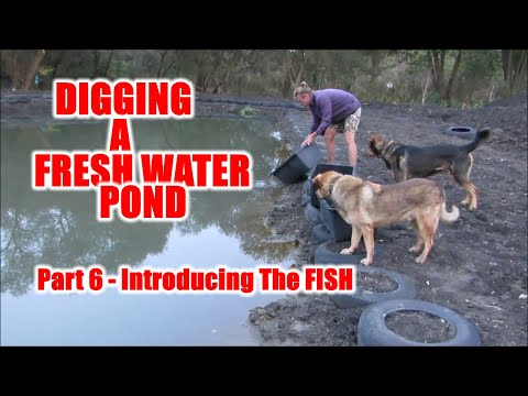 Living Pond Project Part 6 - Introducing the Fish
