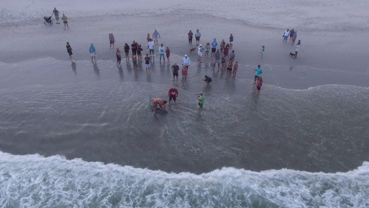 Shark On Topsail Beach (vid 2)
