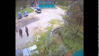 Ангарский адвокат застрелил собаку «просто так»