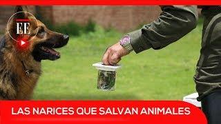 Los perros que huelen el tráfico ilegal de especies silvestres   El Espectador