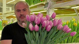 ЛУКОГОН. Технологии выращивания и выгонки тюльпанов.