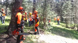 Sertifikalı Bolu ormanlarında ağaç kesimi