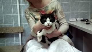 Катаракта травматическая у кошки. Кошка Виша, клинический случай.