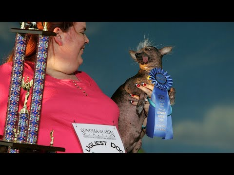 Mark - WORLD's UGLIEST DOG CONTEST THIS WEEKEND