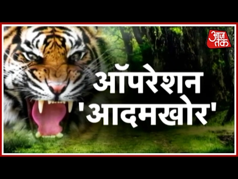 Man-eater Tiger Finally Caught In Pilibhit UP