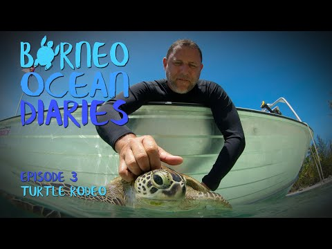 Video Of The Week | High speed diving - Turtle Rodeo [4K] | Borneo Ocean Diaries (S01E03) | SZtv