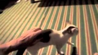 Cat-astrophe Visits My Tukul