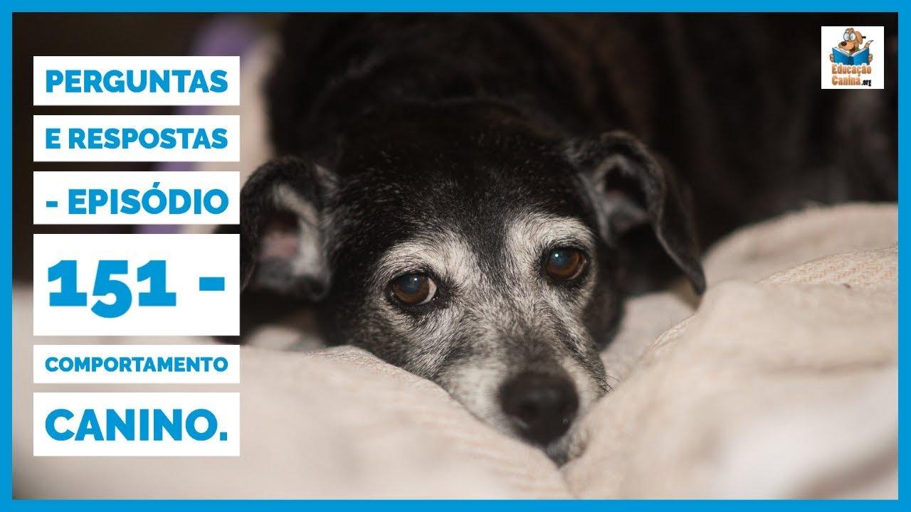Perguntas e Respostas - Episódio 151 - Comportamento Canino.