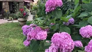 Скачать Моему прекрасному саду 20 лет и моему любимому сыну тоже 20 лет