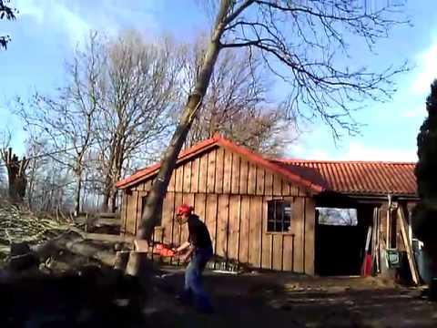Baum Fällt Auf Haus