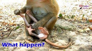 OMG..What happen on newborn monkey Ada?, Why newborn Ada stuck under mom look too hard like this?