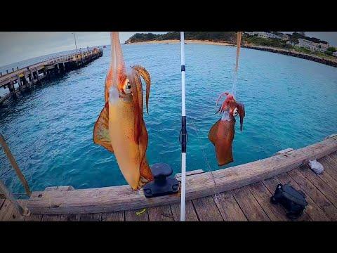 Squid Fishing | EXTREME Conditions #squidfishing