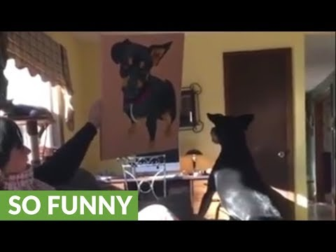 Confused dog barks at painting of himself