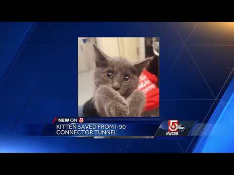 Kitty! A purrfect rescue mission in Mass Pike connector tunnel