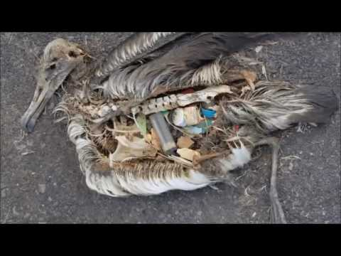 Solid Waste Management Awareness Video