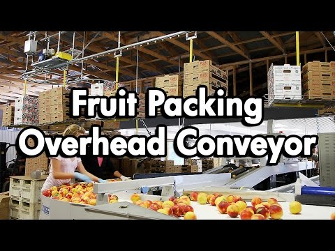 Fruit Packaging using an Empty Carton Delivery Conveyor
