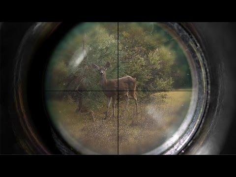 A Zone Archery Hunt - Knoxville Public Lands