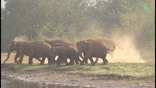 Happy and Cute Elephant Herd Videos Compilation