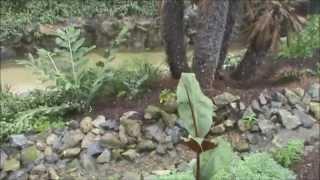 Olmense Zoo, tropische serre