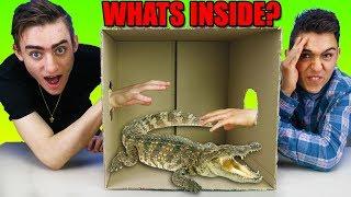 WHAT'S IN THE BOX CHALLENGE!! **I GOT BITTEN!!**