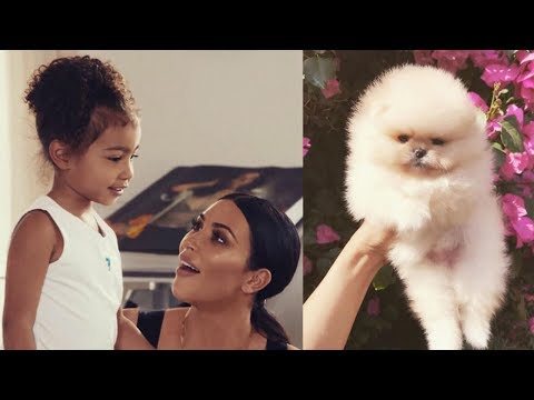 North West Gets ADORABLE Puppy For 4th Birthday & Needs Help Naming It