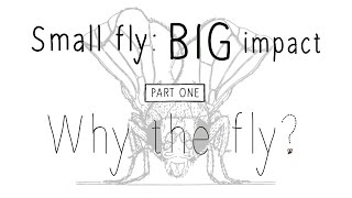 Drosophila: Small fly, BIG impact - Part 1 (Why the fly?)