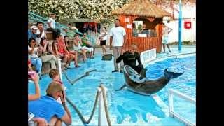 Про дельфинов и др..(Full HD)